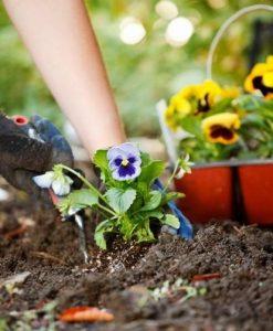 Gardening Events